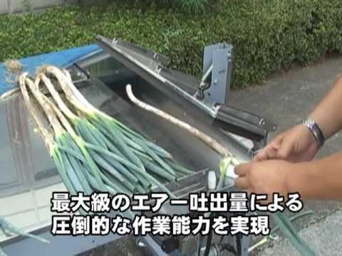 Green onion cutting and peeling machine