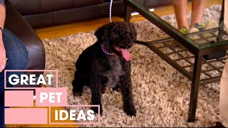 The Windshield Wiper Obsessed Dog | Pets | Great Home Ideas
