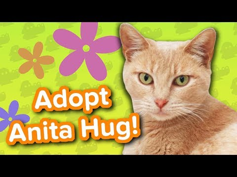 Adopt Anita Hug // Tripod Cat // Adoptable Featurette