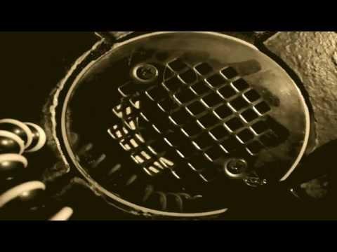 Bathroom Drain Roach Time-Lapse