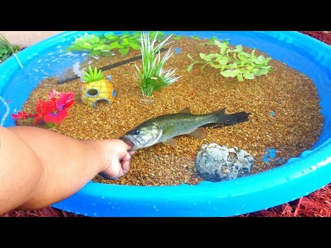 Xxx Mp4 DIY HOMEMADE Kiddie POOL FISH POND Aquarium 3gp Sex