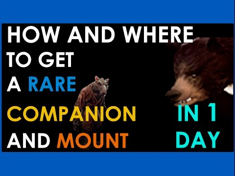 NEVERWINTER PS4 HOW TO GET A RARE MOUNT AND COMPANION IN 1 DAY