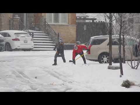 Ice Storm in Toronto and Southern Ontario Freezing Rain Downs Trees