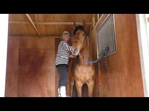 Xxx Mp4 FIRST TIME ASTRIDE Hot Arab Horse Farouk 3gp Sex