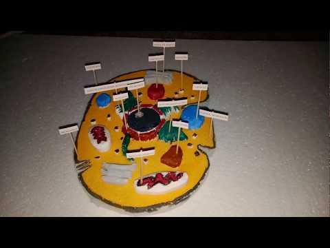School Project  - Animal Cell Model 3D (www.schoolprojectcenter.in )
