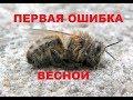 Download  Пчёлы разлетелись весной. Первый плачевный облёт семьи. Недостаток корма.  MP3,3GP,MP4