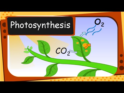 Science - Plant's food and Photosynthesis - English
