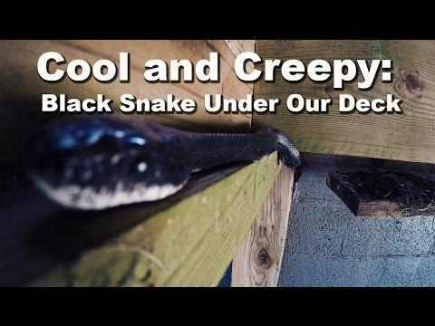 Black Snake Under Deck - GoPro Super Close Up