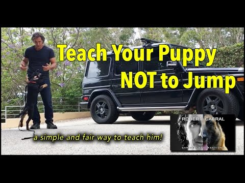 Puppy Training - Teaching Puppies Not to Jump - Puppy and Dog  Training