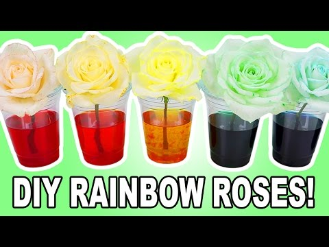 DIY RAINBOW ROSES!