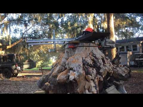 Pine burl stump 1st cut