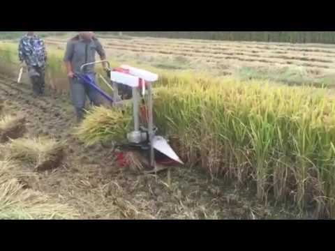 Rice / Crops cutting binding machine.