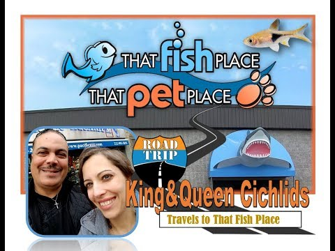 That Fish Place- A Royal Visit by King and Queen Cichlids