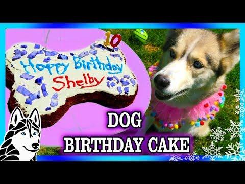 DIY DOG BIRTHDAY CAKE | DIY Dog Treats | Snow Dogs Snacks 78