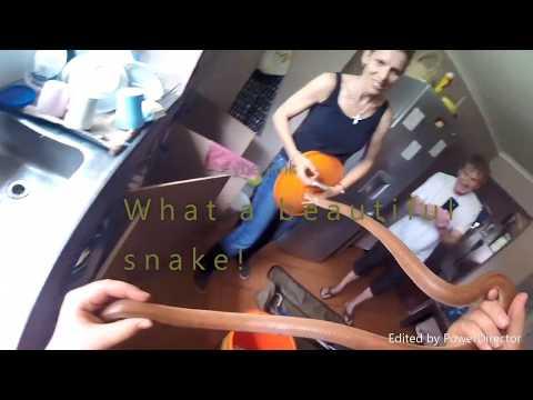 Arne Hobbs - Brown House Snake 2 Oct 2017