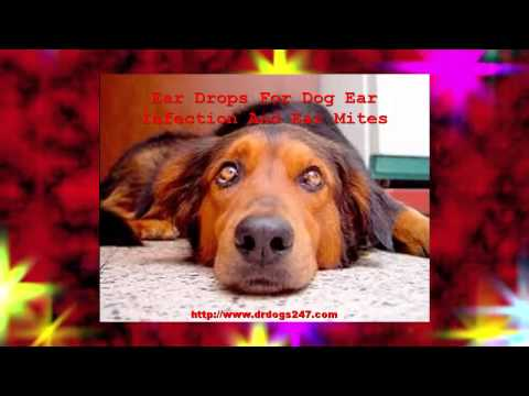 Ear Drops For Dog Ear Infection And Ear Mites