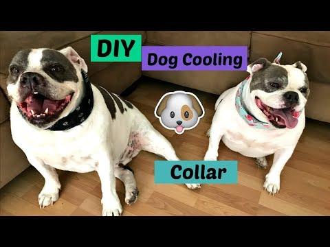 DIY easy to make dog cooling collar