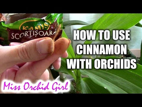 Orchid treatment - How to properly use cinnamon with orchids