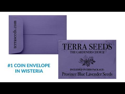 #1 Coin Envelopes - Envelopes.com