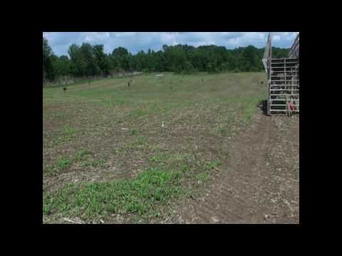 Cutting Corn Maze at Ellms Family Farm 2009