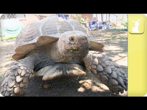 My Pet Tortoise - Habitat