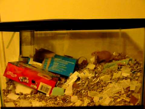 New gerbil acting silly