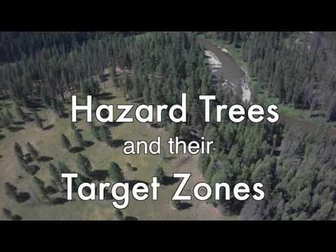 Tree Hazards and Target Avoidance
