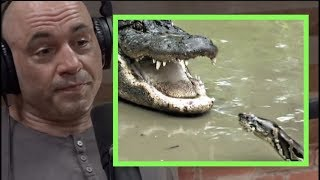 Joe Rogan | Pythons & Alligators Are Battling in the Everglades