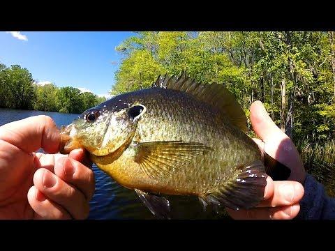 Cashie River, NC Bluegill Fishing - May 2017