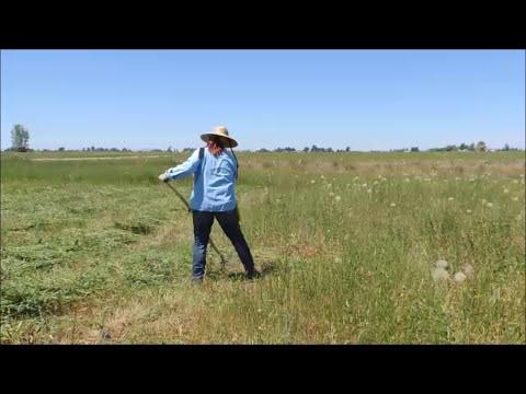 Making Hay - Part 1