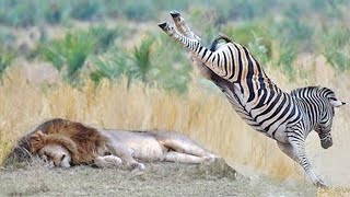 15 Animals That Could Defeat A Lion