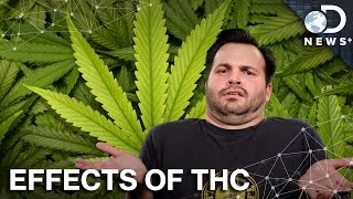 How THC Replaces Your Brain