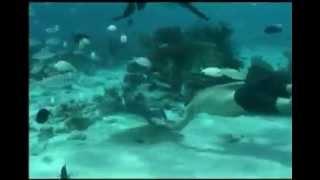 Steve Irwin S Death What Happened