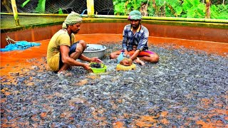 Hybrid Magur Fish Farming Business in India