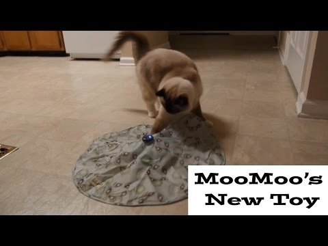 MooMoo's New toy (Undercover mouse)