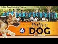 The Story Of Trained Police Dogs  Exclusive  Mictv