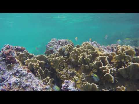 St  Thomas - Frenchman's Reef & Morning Star