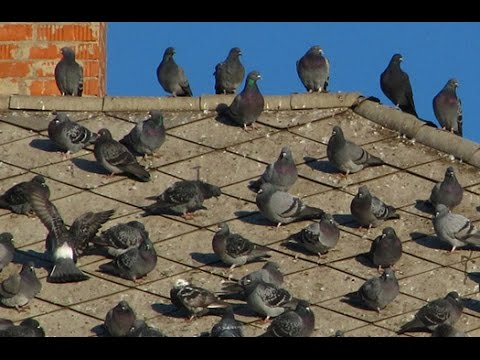 Bird Control Services - How to Get Rid Of Birds