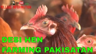 100%PURE Australorp/Faiyumi/Masri/RIR Chicken Breeds