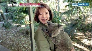 Cute Koala cuddled up in Sunny