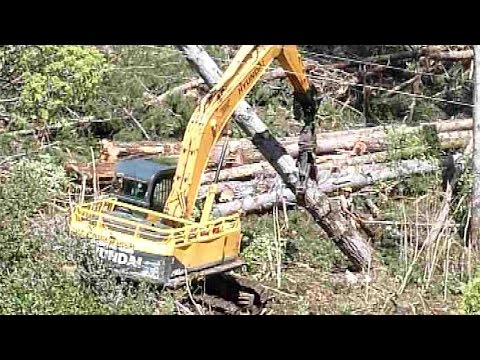forest machines grappling assisted tree felling. New Zealand