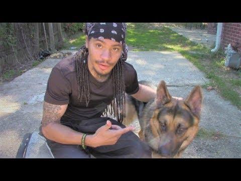 Brushing my Dog | B4 you get a German Shepherd | All this FUR!!!
