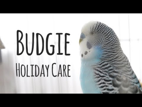 Budgie: Holiday Care