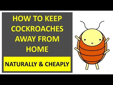 How to Keep Cockroaches Away From Home Naturally & Cheaply
