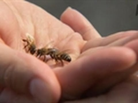 Man Scared of Bees | My Extreme Animal Phobia