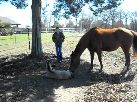 Newborn Horse Sneezes and Falls Over!  Funny Horse Fail