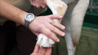 The Best Way To Cut A Dogs Nails