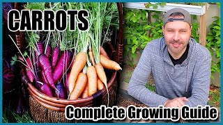 How to Grow Carrots from Seed to Harvest