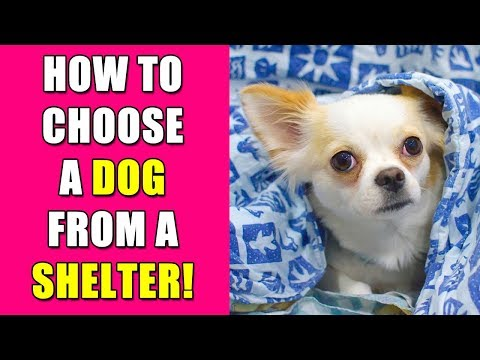 How to Choose A Dog From a Shelter - Knows to Nose