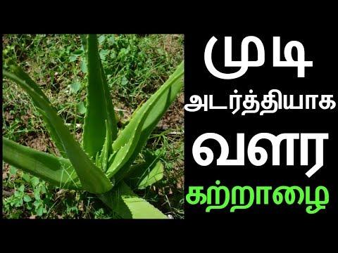 முடி உதிர்வதை தடுக்க அடர்த்தியாக முடி வளர கற்றாழை   How To Use Aloe Vera For Hair Growth in Tamil